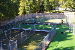 Green Level Kennel Photo Gallery